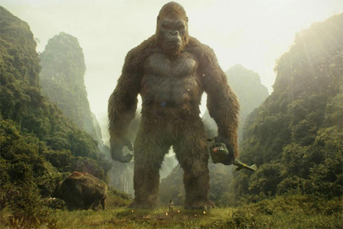 Thức ăn của Kong là gì?