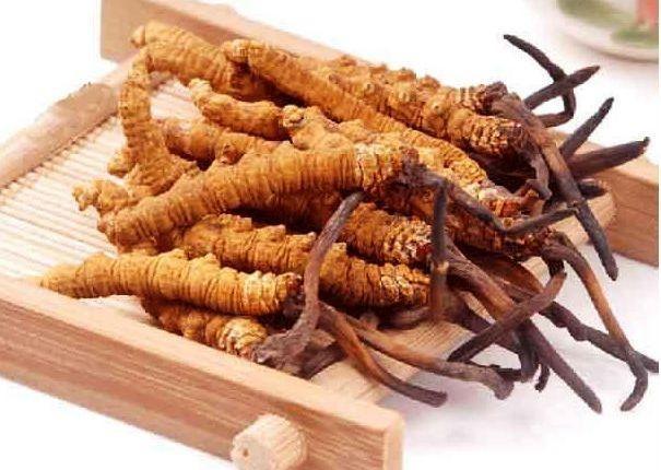 Trong đông trùng hạ thảo chứa rất nhiều những dưỡng chất quý giá