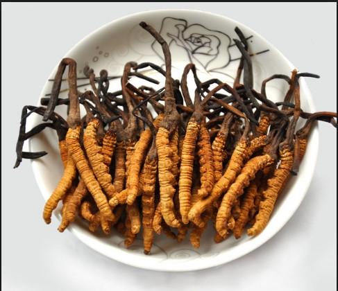 Đông trùng hạ thảo nguyên con sấy khô