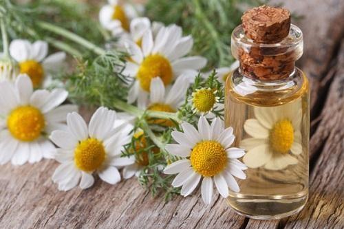 Thực phẩm chức năng chiết xuất hoa cúc tăng cường hệ miễn dịch