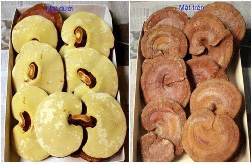 Mặt trên, mặt dưới nấm linh chi của Hàn Quốc